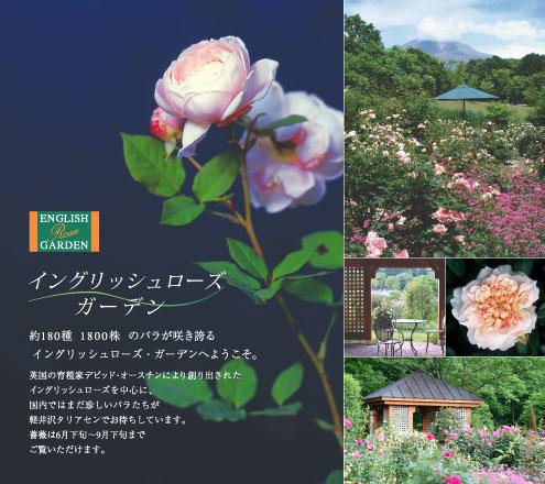 Rose2008new