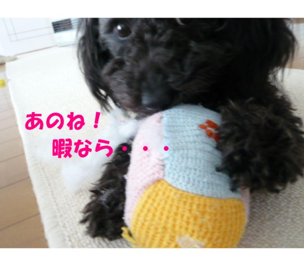 Photo_121