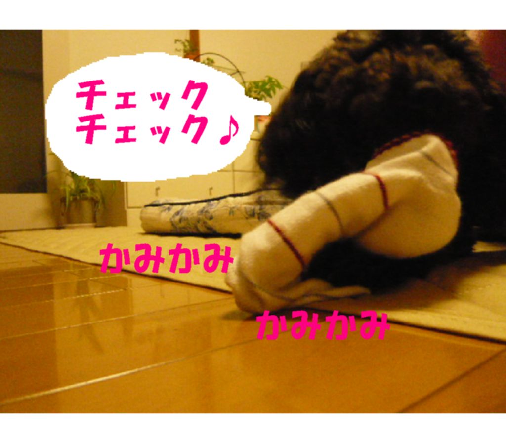 Photo_177