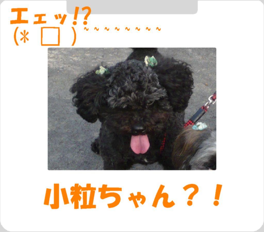Photo_184