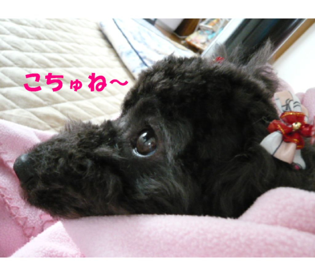 Photo_228