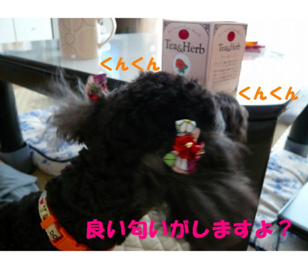 Photo_257