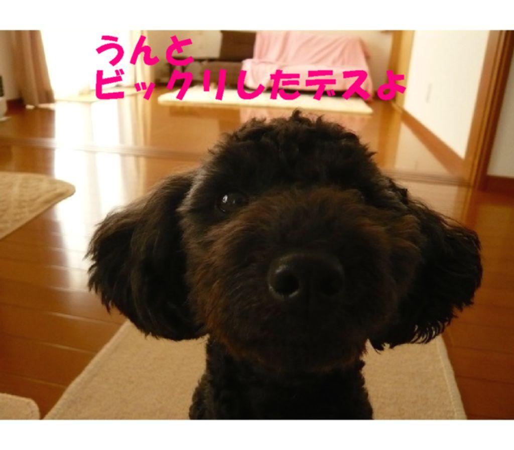 Photo_288